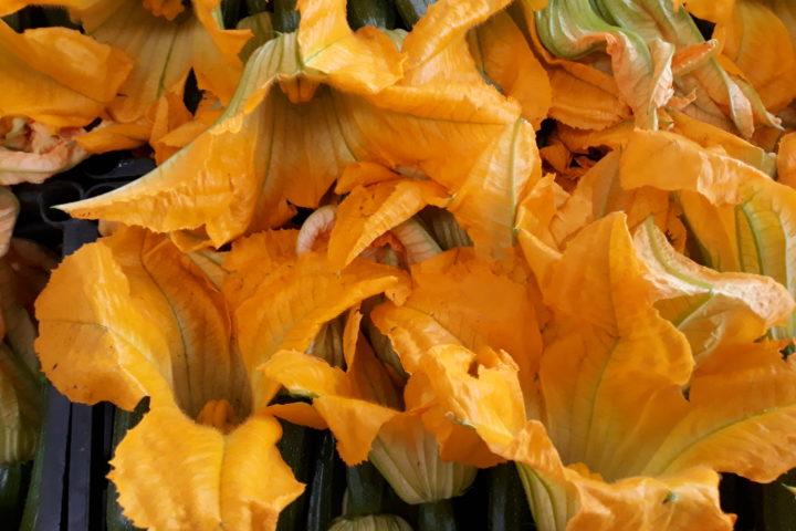 Nella cucina del Mar de Plata i fiori di zucchina più belli…
